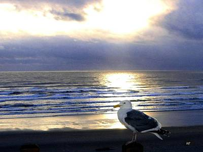 Photograph - Seagull Sentinel by Will Borden