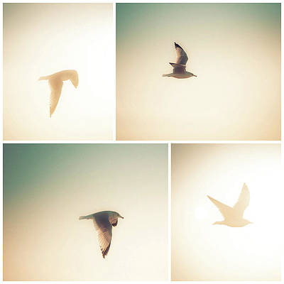 Photograph - Seagull Sight by T Brian Jones