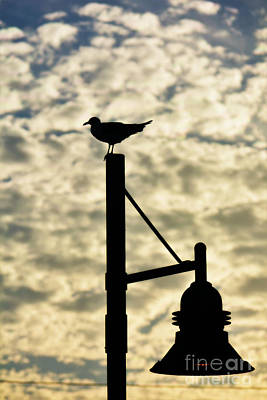 Photograph - Seagull Silhouette 1 by Kelly Nowak
