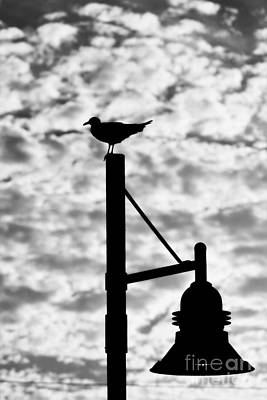 Photograph - Seagull Silhouette 2 by Kelly Nowak