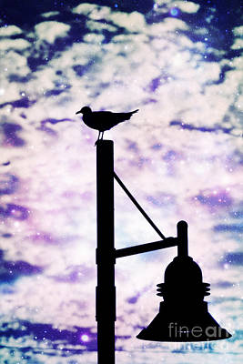 Photograph - Seagull Silhouette 3 by Kelly Nowak