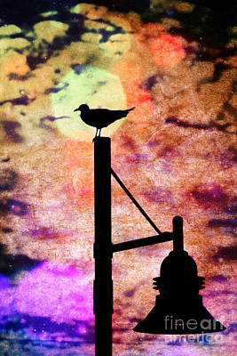 Photograph - Seagull Silhouette 4 by Kelly Nowak