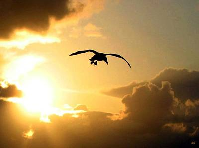 Photograph - Seagull Silhouette by Will Borden