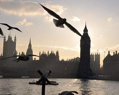 Photograph - Seagull Skyline by Matt MacMillan