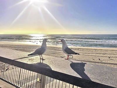Royalty-Free and Rights-Managed Images - Seagull Sonnet  by Az Jackson