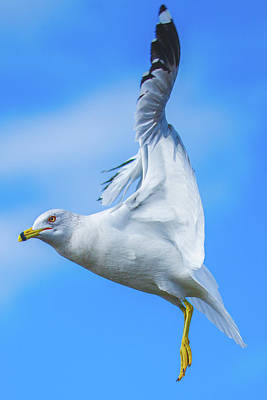 Photograph - Seagull Speed Brakes Deployed by Jeff at JSJ Photography