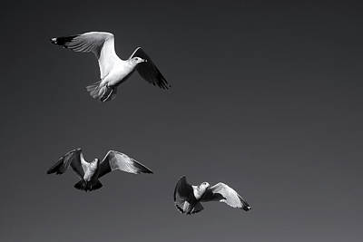 Digital Art - Seagull Squadron by Patrick Groleau
