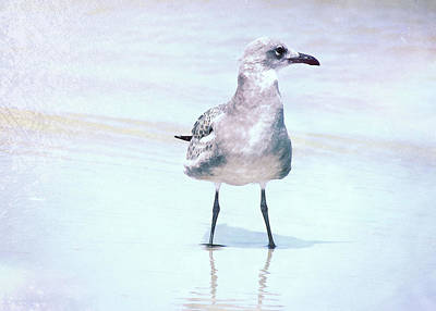 Photograph - Seagull Stance by JAMART Photography