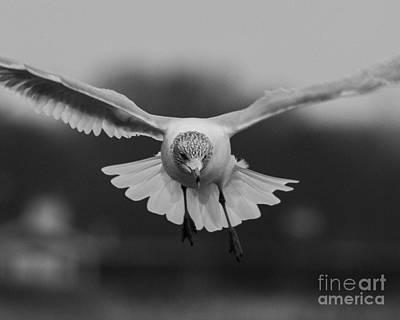 Door Locks And Handles - Seagull by Steven Natanson