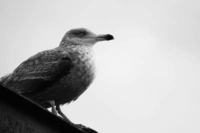 Photograph - Seagull Still Life by Joe Faherty