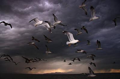 Seagull Storm Art Print by Gene Praag