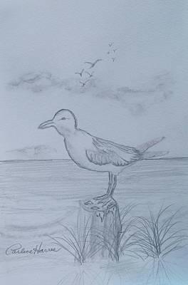 Ocean Sunset Drawing - Seagull Stump by Carlene Harris