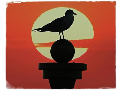 Photograph - Seagull Sunset by Alice Gipson