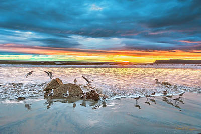 Photograph - Seagull Sunset by Dan McGeorge