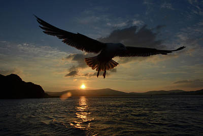 Photograph - Seagull Sunset Flight by Barbara Walsh