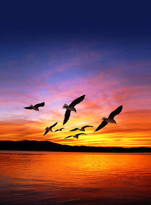 Seagull Sunset   Art Print by Gravityx Designs