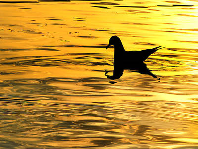 Photograph - Seagull Swimming In Chrome by Scott Hovind