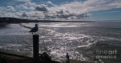 Photograph - Seagull Watch by Nareeta Martin