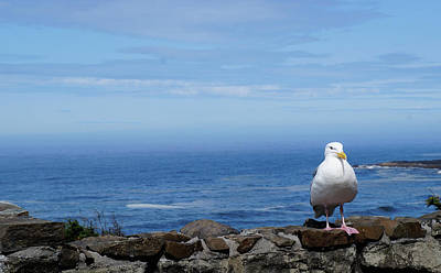Photograph - Seagull Watching by Nadja Meyer