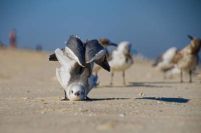 Photograph - Seagull Yoga by Beth Sawickie
