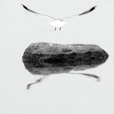 Photograph - Seagull In Flight by Jenny Regan