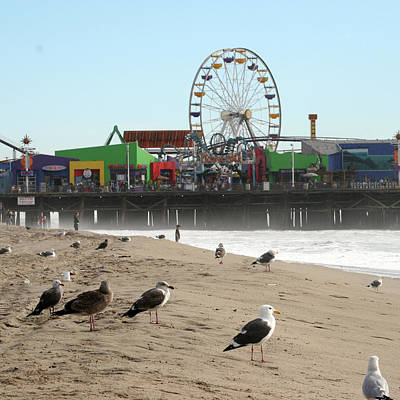 Photograph - Seagulls And Ferris Wheel by Ken Wood