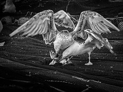 Photograph - Seagulls And Fish by Bob Orsillo