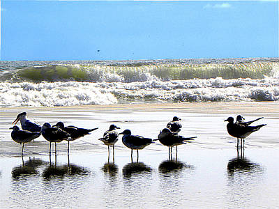 Seagull Photograph - Seagulls And Terns In The Daytona Surf  by Chris Mercer