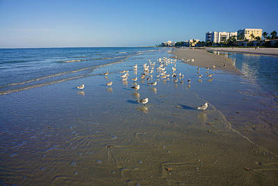 Seagulls And Terns On The Beach In Naples, Fl Art Print
