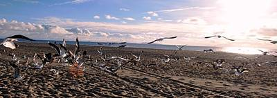 Photograph - Seagulls At Beach Panoramic View by Matt Harang