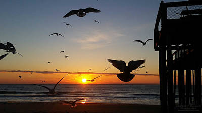 Photograph - Seagulls At Sunrise by Robert Banach