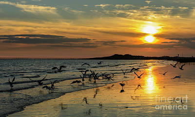 Seagulls Photograph - Seagulls At Sunset By The Sea. by Geoff Smith