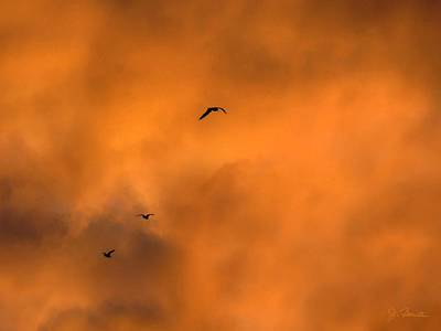 Photograph - Seagulls At Sunset by Joe Bonita
