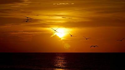 Seagulls At Sunset Art Print by Paul Wilford