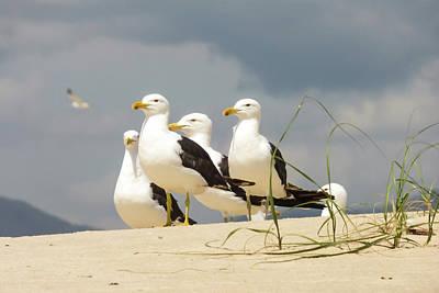 Seagulls At The Beach Art Print