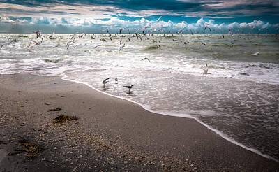 Shark Art - Seagulls at the seashore by Gene Camarco
