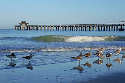 Photograph - Seagulls Congregating By The Naples Pier Naples Florida by Toby McGuire