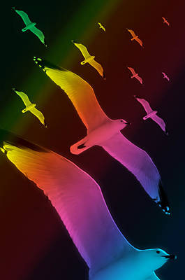 Photograph - Seagulls Dance In Color 5 by Pedro Cardona Llambias