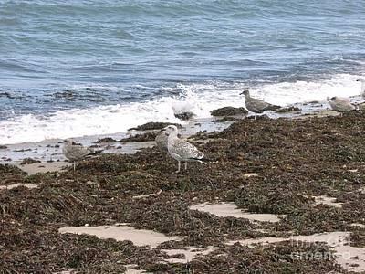 Island Art Photograph - Seagulls Enjoying Block Island Low Tide by Anthony Morretta