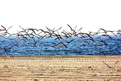 Photograph - Seagulls Flight At Cape May by John Rizzuto