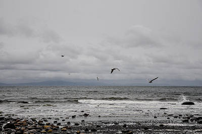 Photograph - Seagulls Flight Path by Roxy Hurtubise