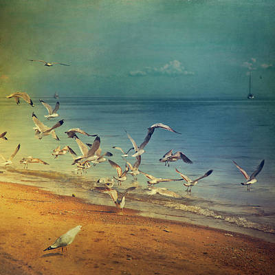 Color Image Photograph - Seagulls Flying by Istvan Kadar Photography