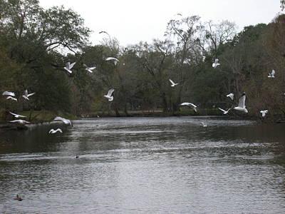 Photograph - Seagulls In Flight by Aggy Duveen