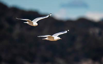 Seagulls In Flight Art Print