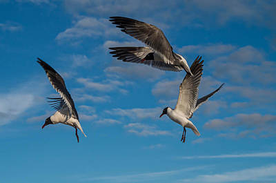 Seagulls In Flight Art Print