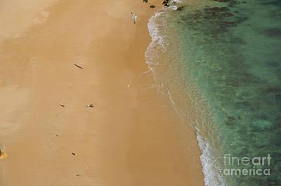 Beach Photograph - Seagulls In Praia Deserta by Angelo DeVal