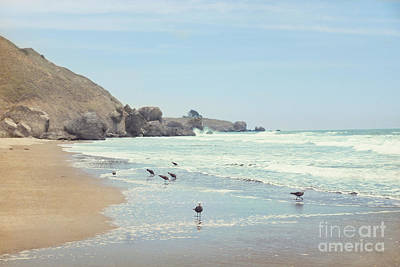 Photograph - Seagulls In The Surf by Cindy Garber Iverson