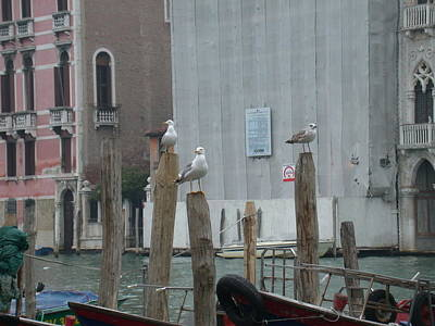 Photograph - Seagulls In Venice by Aggy Duveen
