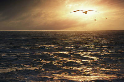 Hover Photograph - Seagulls Into The Sun by Carlos Caetano