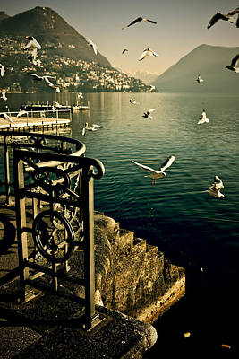 Of Stairs Photograph - Seagulls by Joana Kruse
